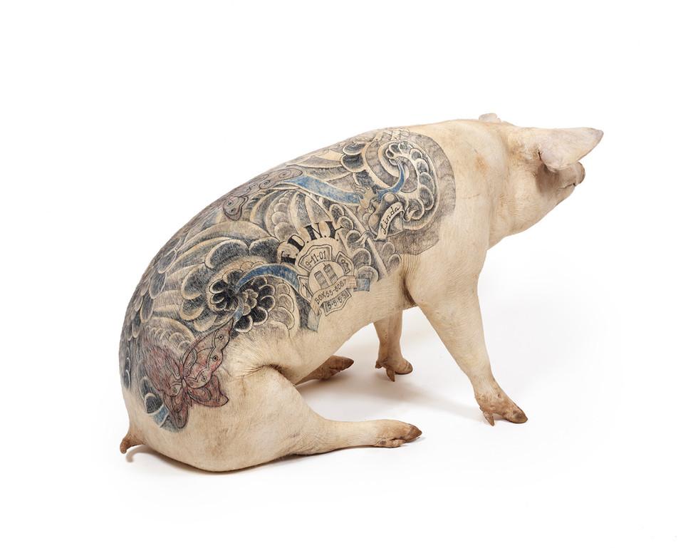 Tattooed Pigs Wimdelvoyebe